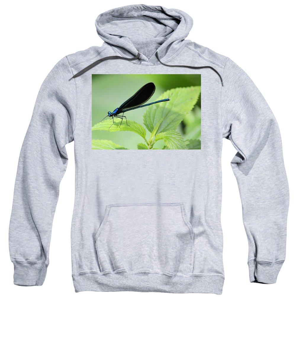 Damselfly Sweatshirt featuring the photograph Black Winged Damselfly 7261 by Bonfire Photography