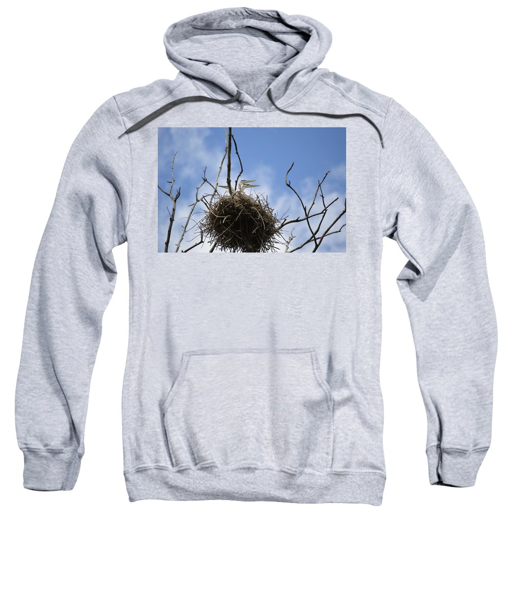 Blue Herons In A Rookery. Sweatshirt featuring the photograph Blue Heron Rookery 7212 by Bonfire Photography