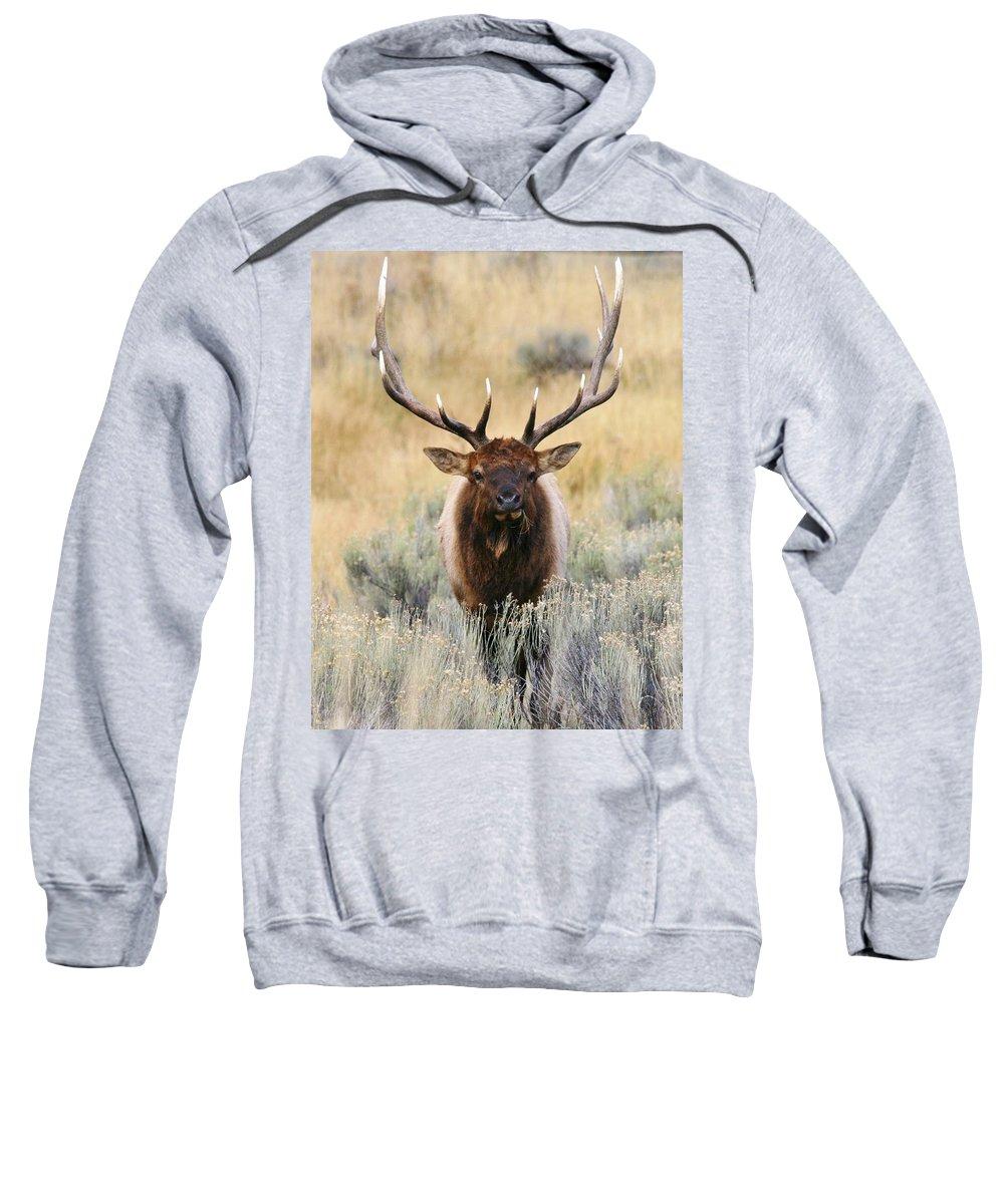 Elk Sweatshirt featuring the photograph Coming Head On by Karen Jones