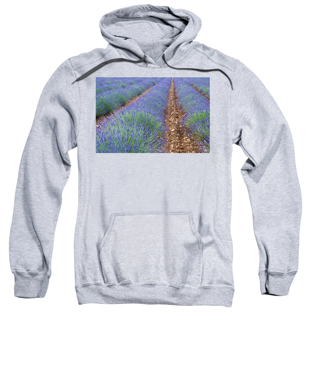 Lavender Sweatshirt featuring the photograph 080720p071 by Arterra Picture Library