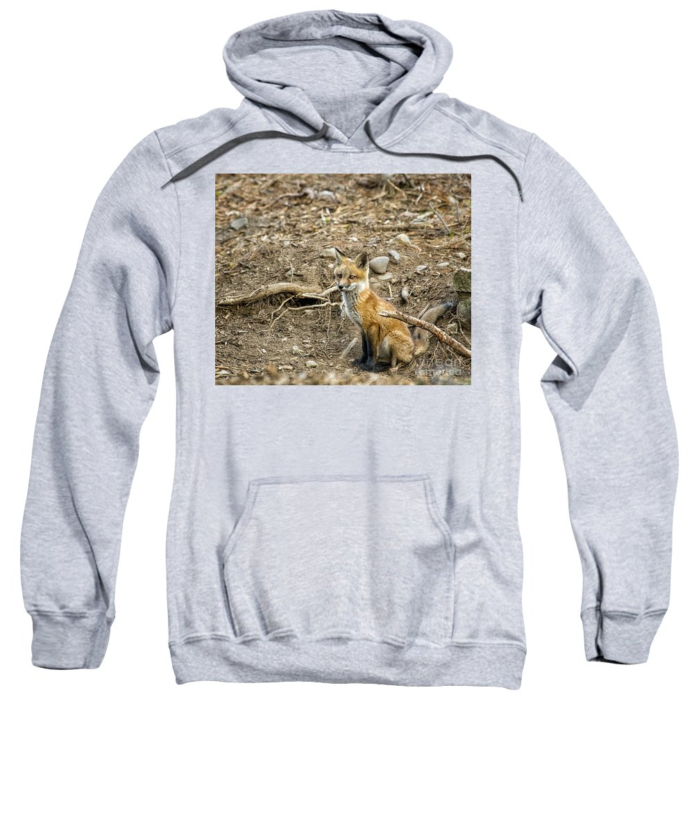 Foxes Sweatshirt featuring the photograph Alert by Claudia Kuhn