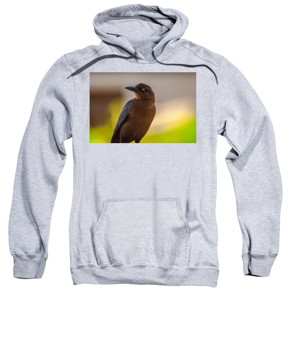 Animal Sweatshirt featuring the photograph Bird by Amel Dizdarevic