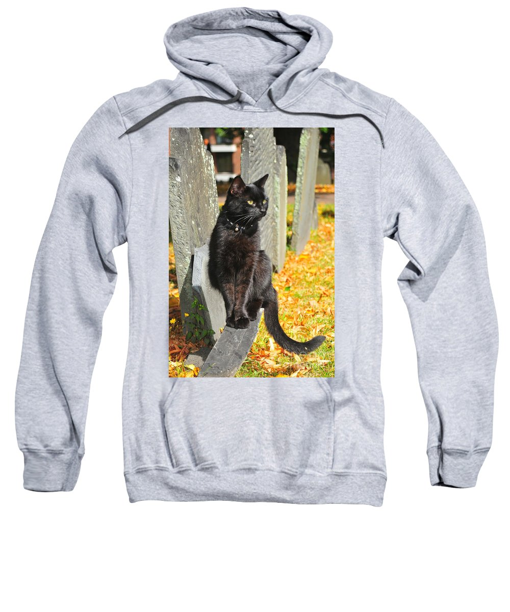 Black Cat Sweatshirt featuring the photograph Black Cat by Catherine Reusch Daley