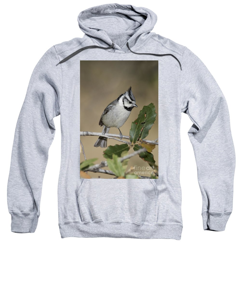 Bridled Titmouse Sweatshirt featuring the photograph Bridled Titmouse by Anthony Mercieca