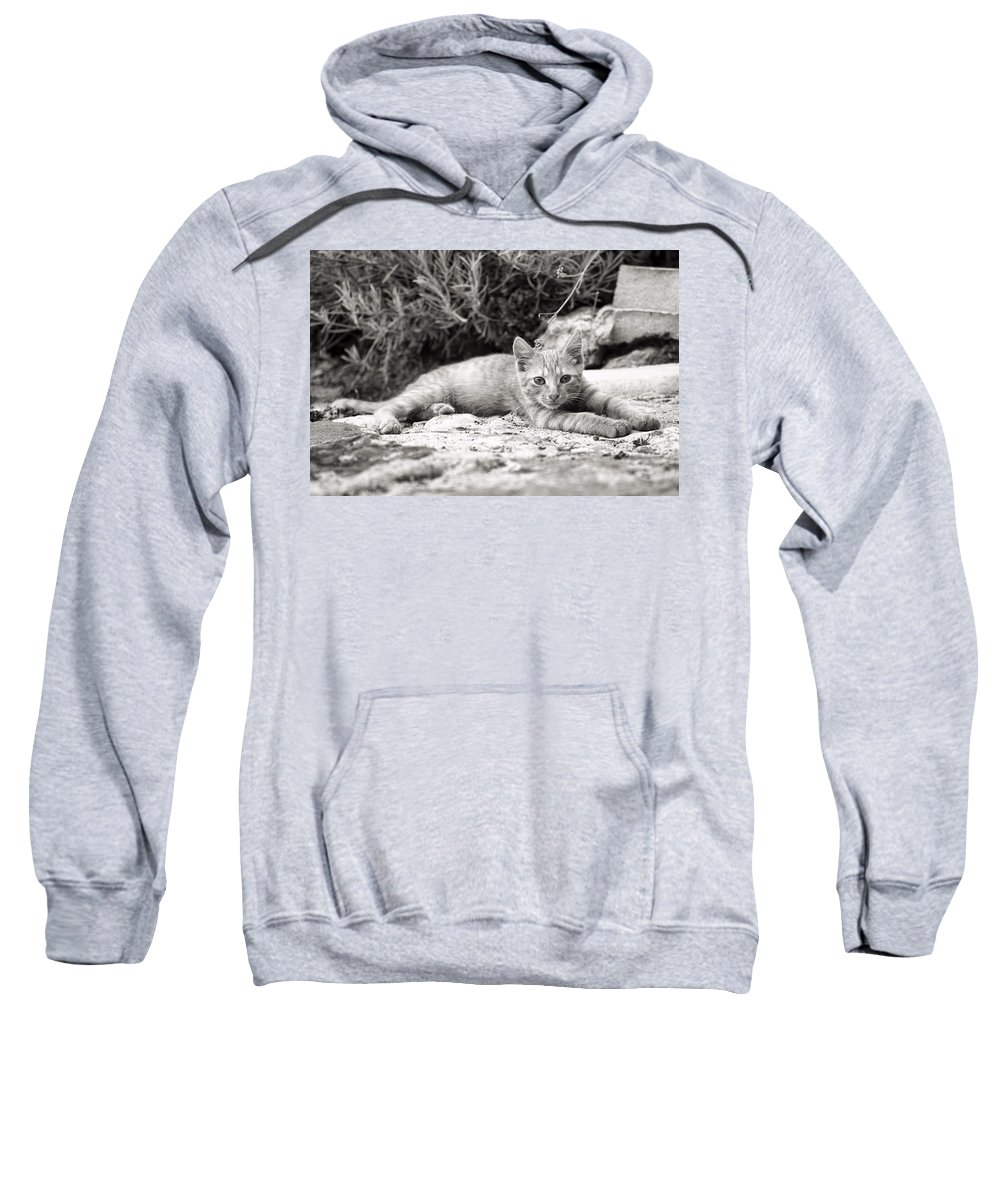 Cat Blog Sweatshirt featuring the photograph Cat And Lavender by For Ninety One Days