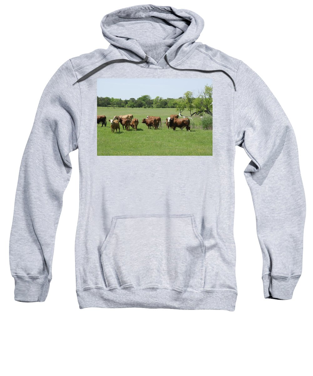 Herd Sweatshirt featuring the photograph Cattle Grazing by Charles Beeler