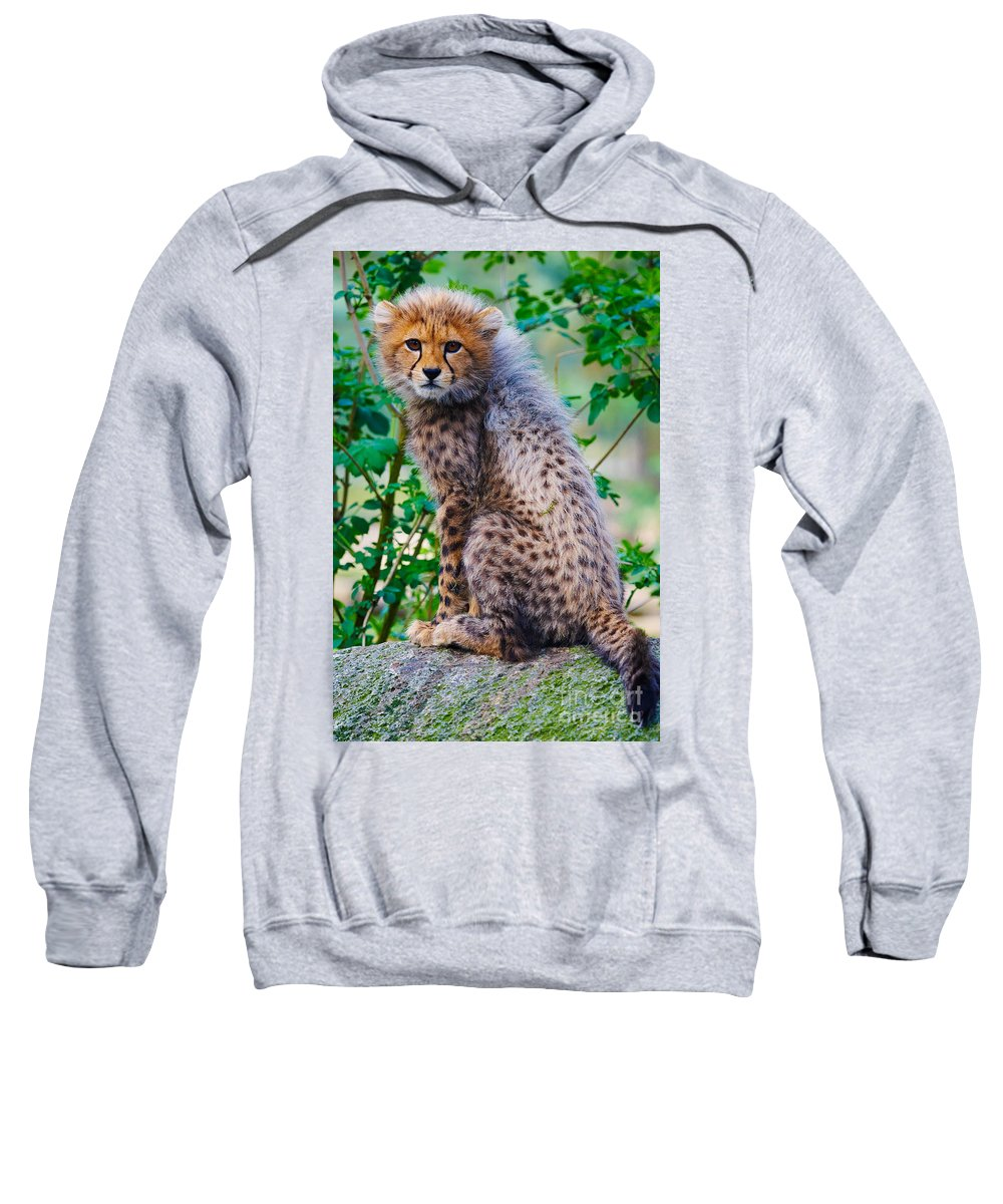 Acinonyx Sweatshirt featuring the photograph Cheetah Cub On A Rock by Nick Biemans