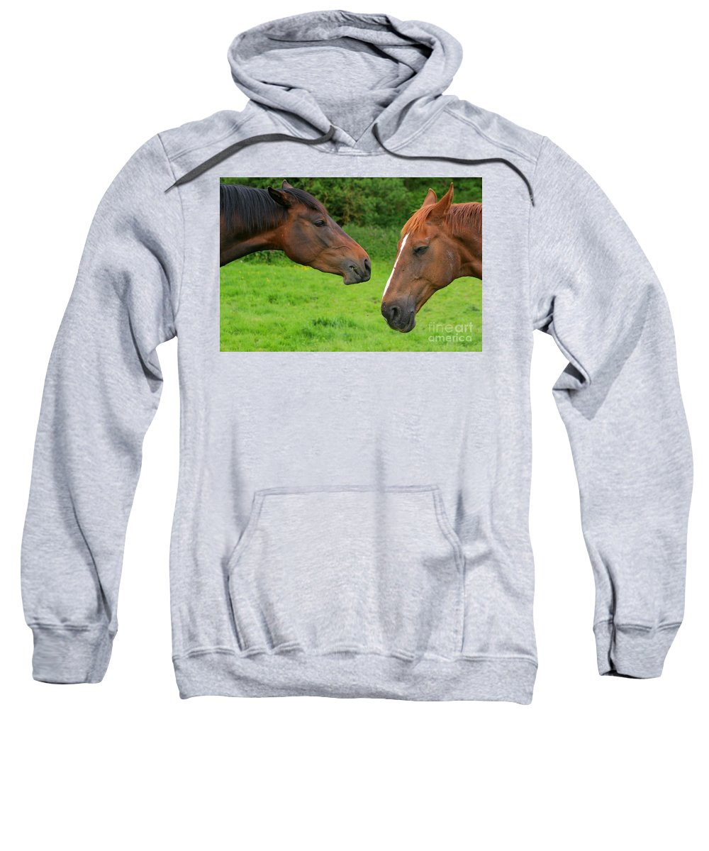 Horse Sweatshirt featuring the photograph Conversations by Angel Ciesniarska