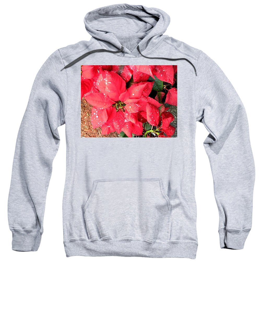 Flowers Sweatshirt featuring the photograph Diamond Encrusted Poinsettias by Patricia Taylor