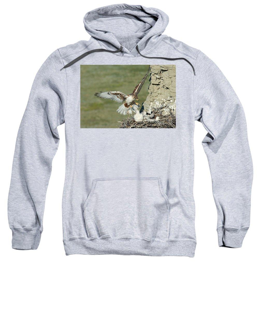 Fauna Sweatshirt featuring the photograph Ferruginous Hawk And Chicks by Anthony Mercieca