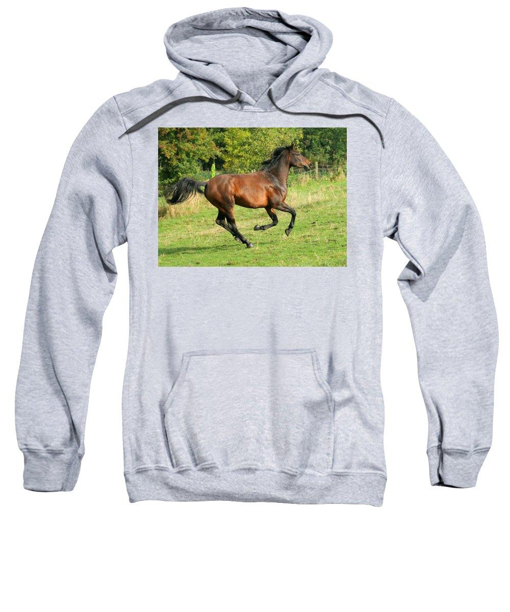 Horse Sweatshirt featuring the photograph Gallop by Angel Ciesniarska