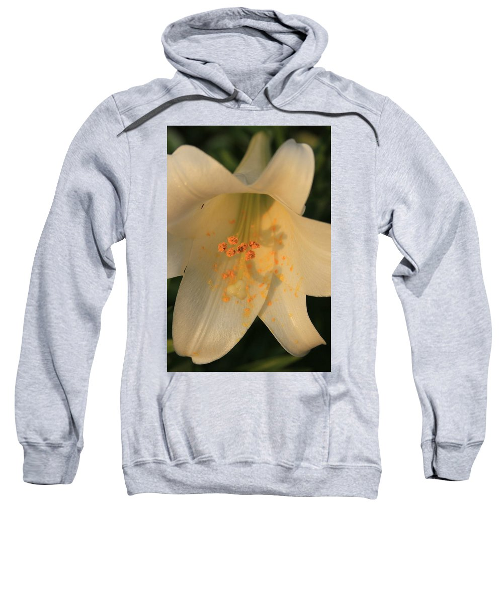 Ant Sweatshirt featuring the photograph Hanging Out by Reid Callaway