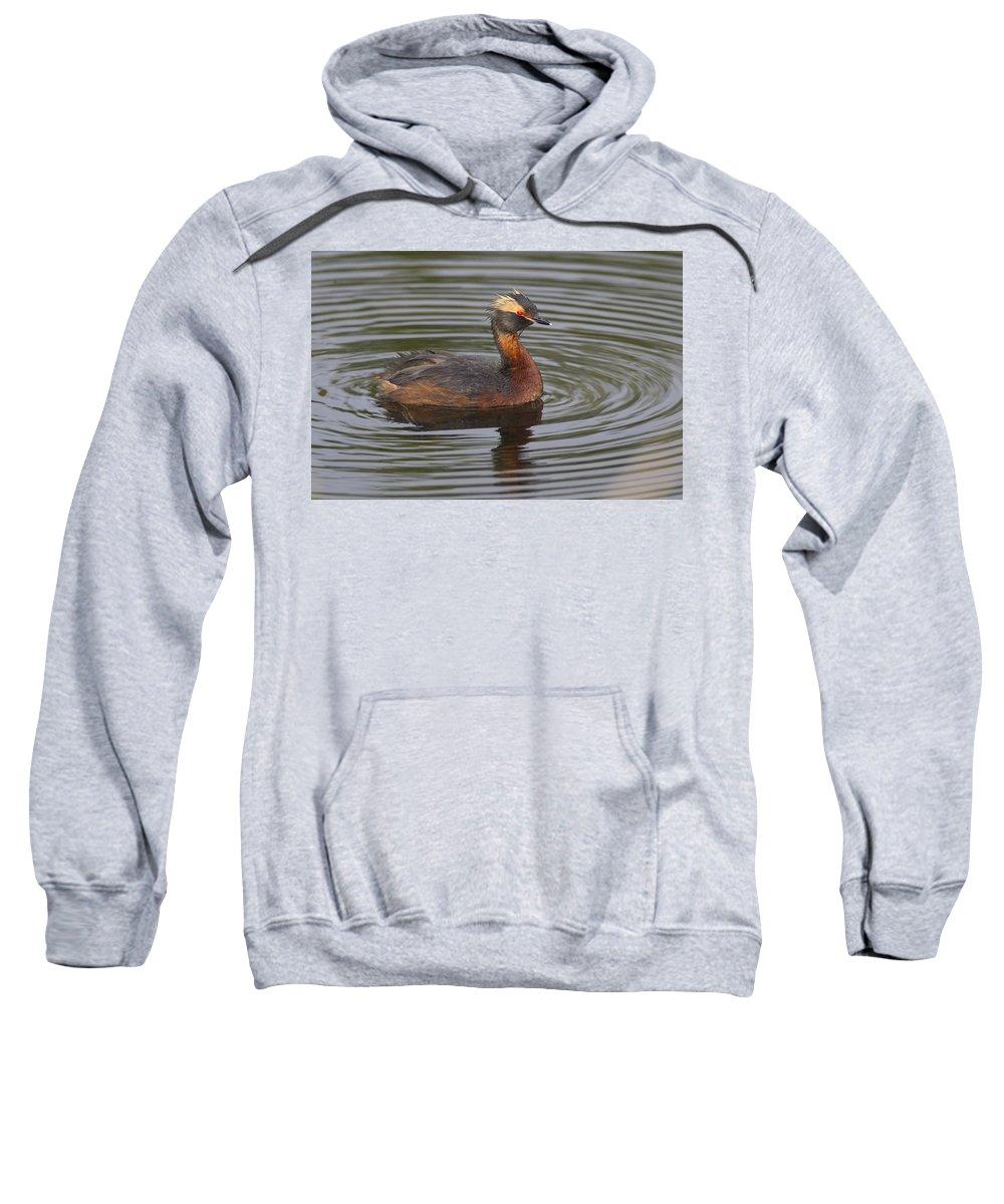 Doug Lloyd Sweatshirt featuring the photograph Horned Grebe by Doug Lloyd