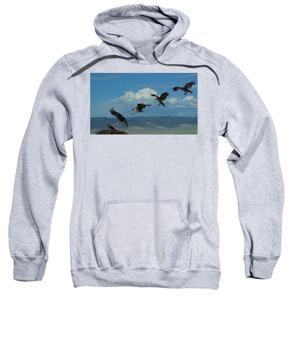 Birds Sweatshirt featuring the digital art Landing Pattern Of The Osprey by Ernie Echols