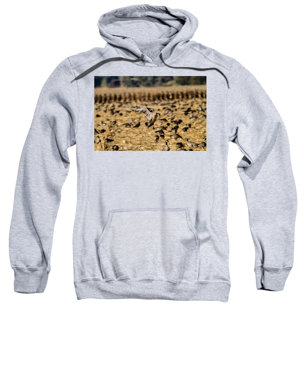 Geese Sweatshirt featuring the photograph 1 Lone Aleutian Landing by Brian Williamson