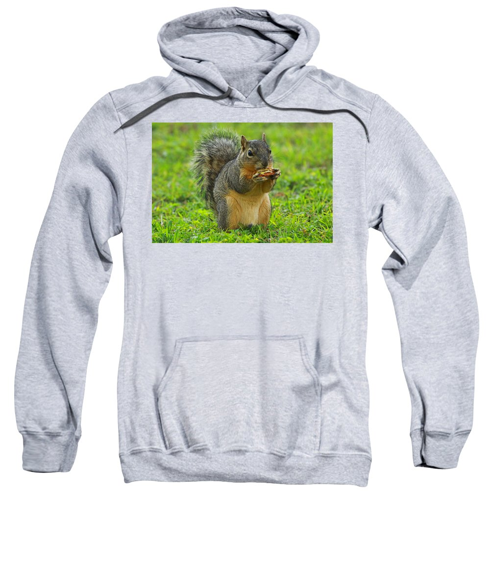Squirrel Sweatshirt featuring the photograph Lunch Time by Ronnie Prcin