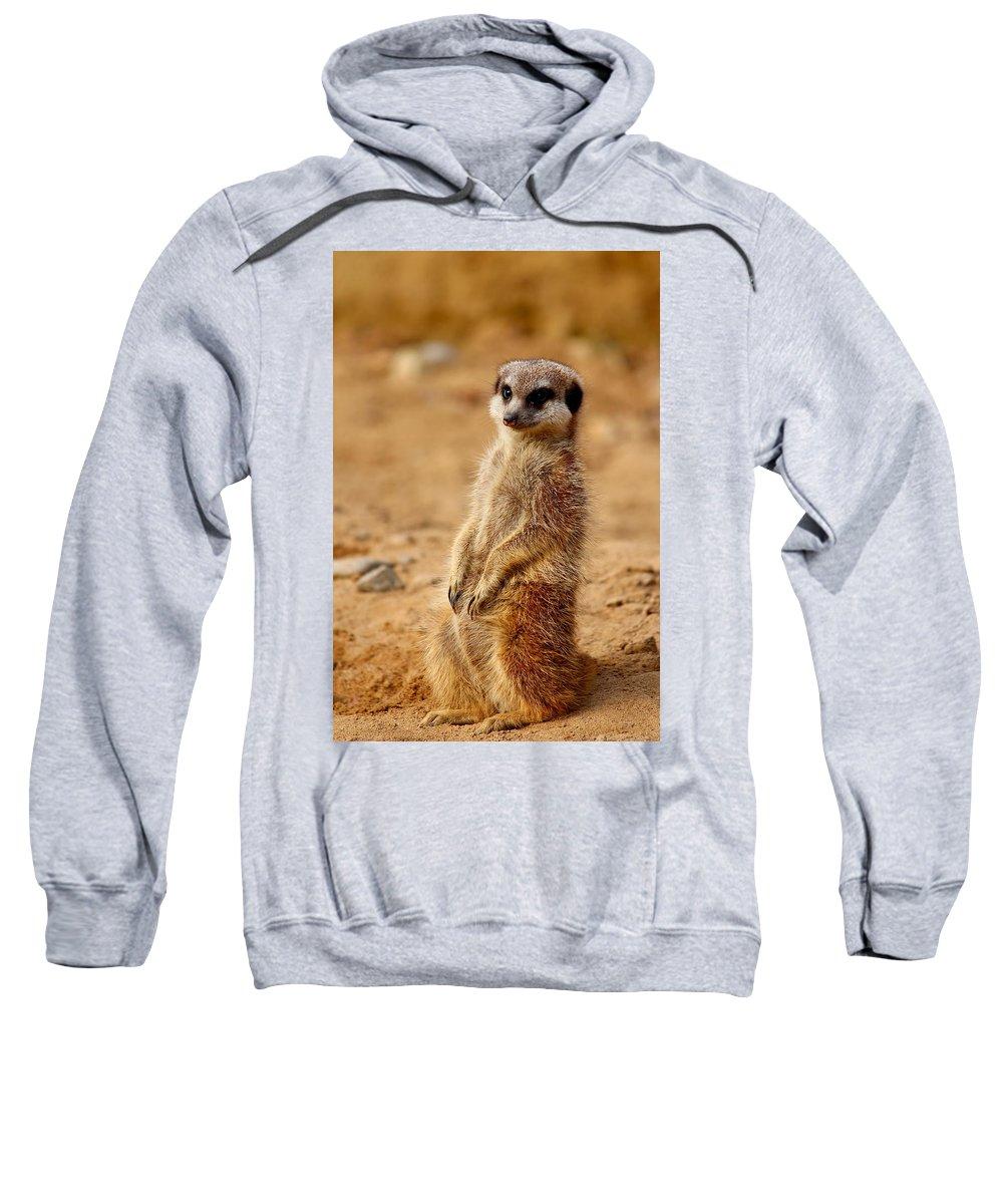 Meerkats Sweatshirt featuring the photograph Meerkats by Heike Hultsch