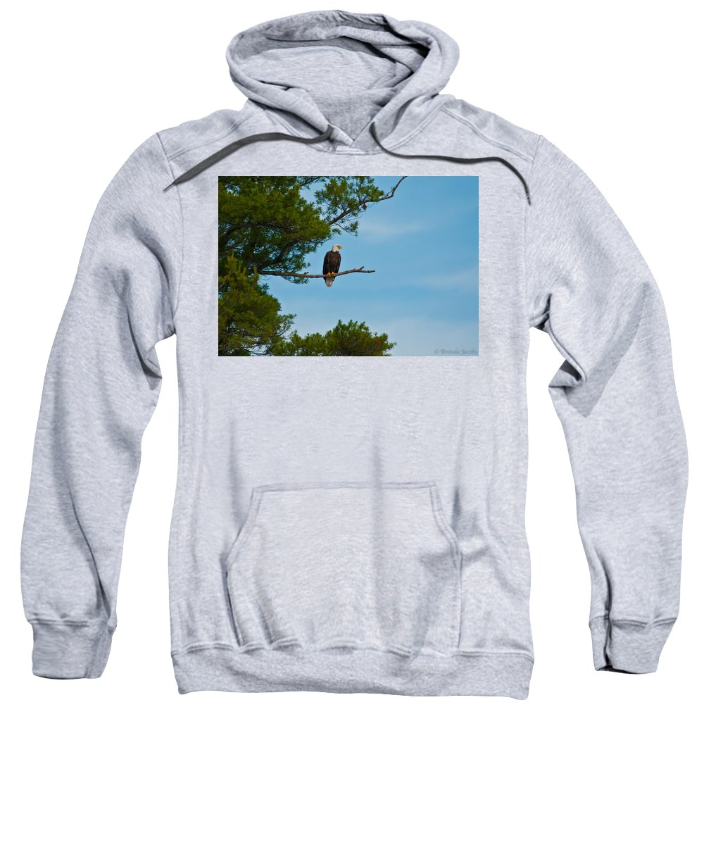 Bald Eagle Sweatshirt featuring the photograph Out On A Limb by Brenda Jacobs