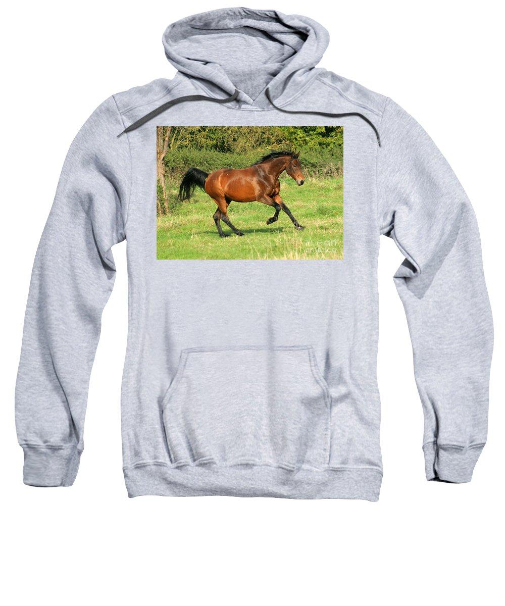 Horse Sweatshirt featuring the photograph Run Run by Angel Ciesniarska