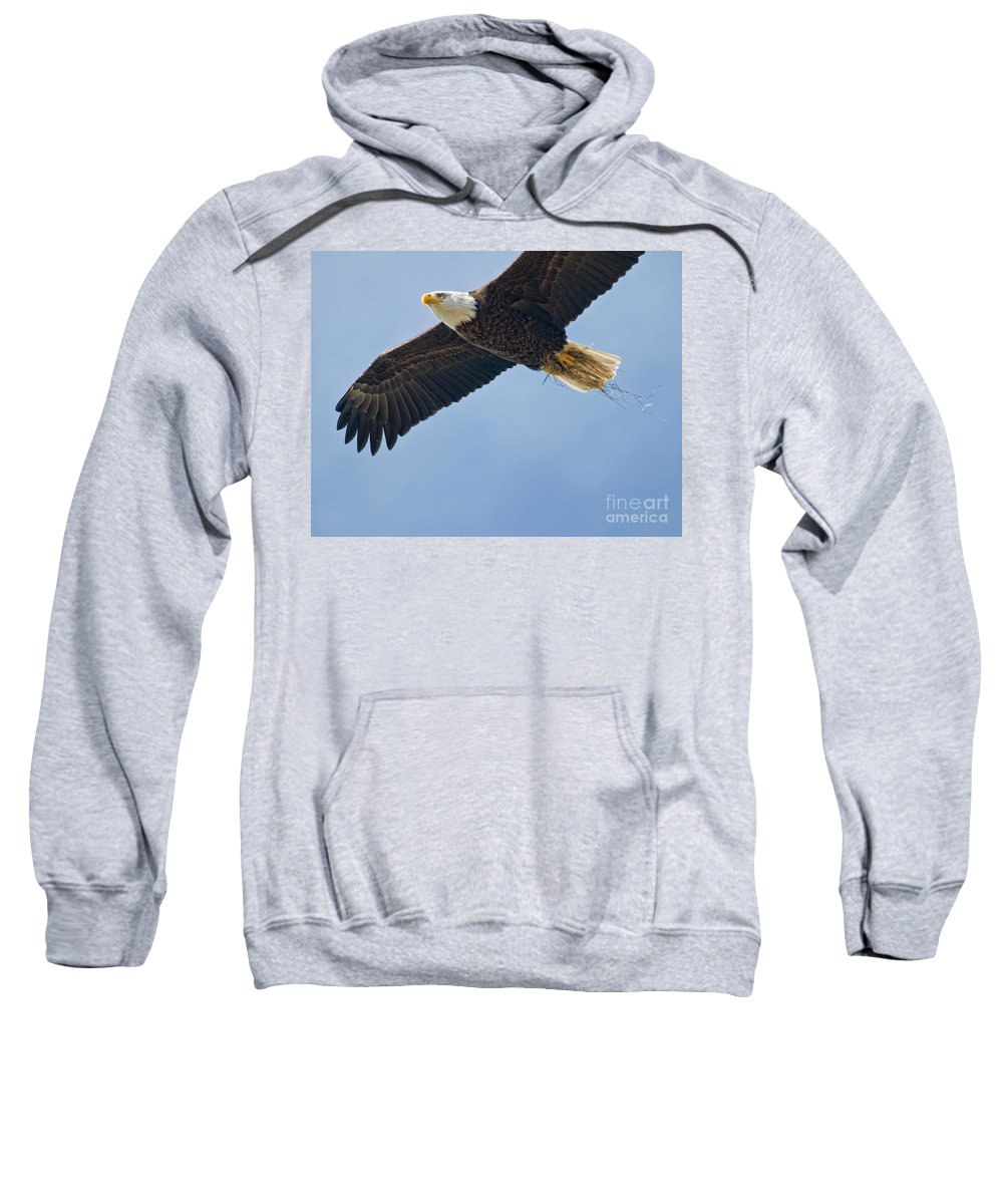 Bald Eagle Sweatshirt featuring the photograph Sailing by Claudia Kuhn