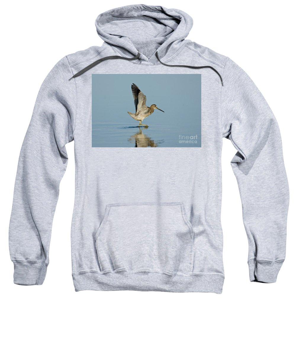 Short-billed Dowitcher Sweatshirt featuring the photograph Short-billed Dowitcher by Anthony Mercieca
