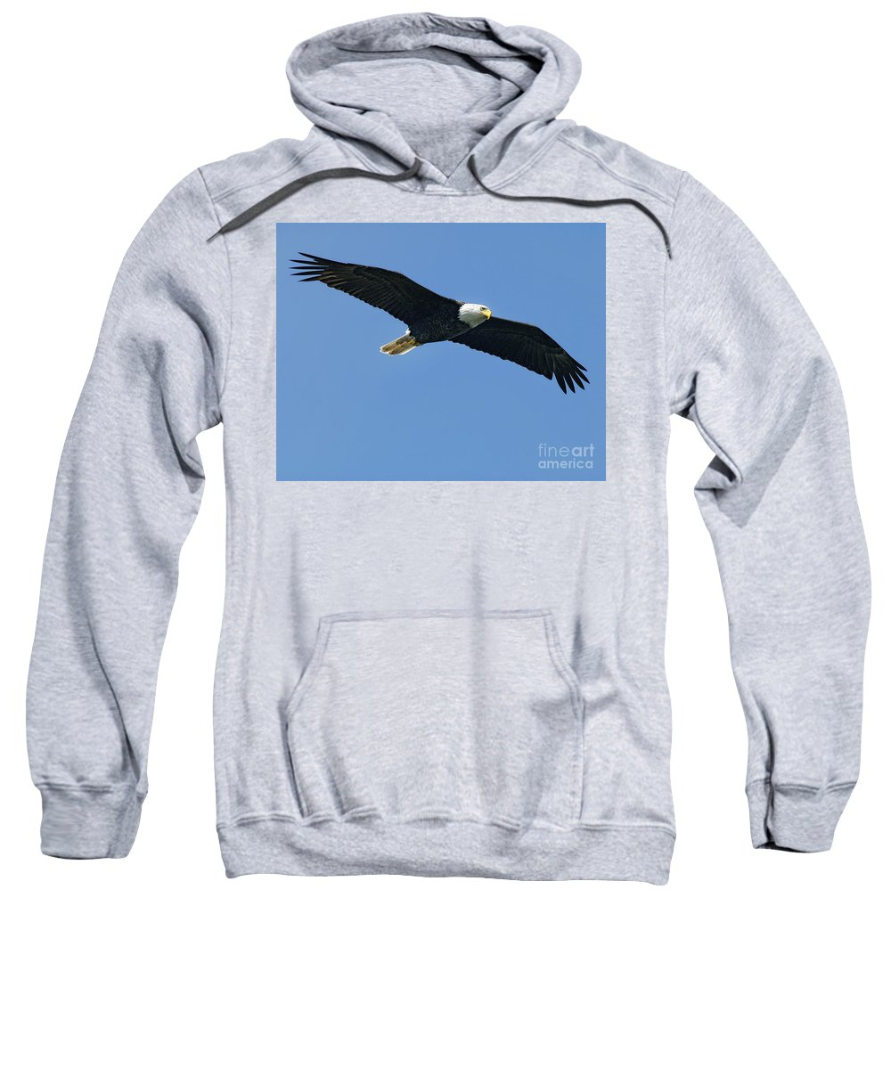 Eagles Sweatshirt featuring the photograph Soaring by Claudia Kuhn