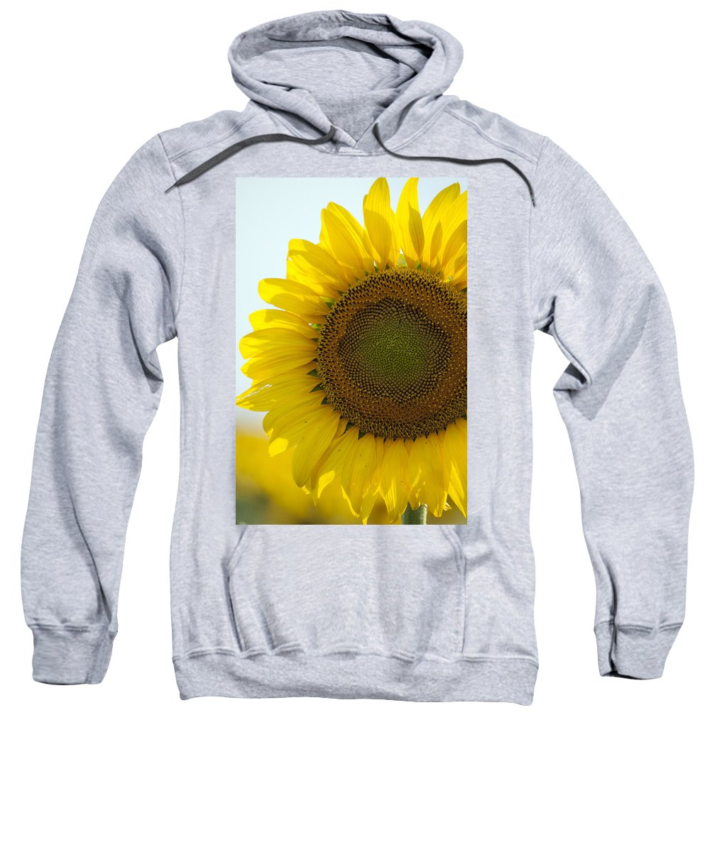 Sunflower Sweatshirt featuring the photograph Sun Kissed by Debby Richards