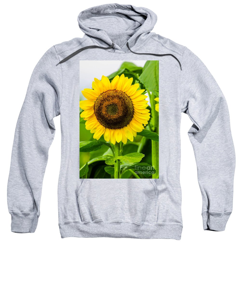 Mexican Sweatshirt featuring the photograph Sunflower by Michael Moriarty
