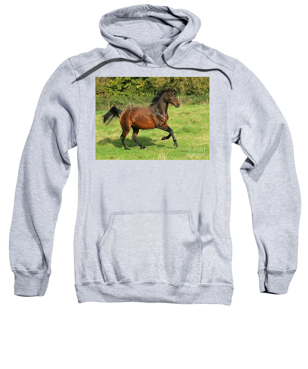 Horse Sweatshirt featuring the photograph Take-off by Angel Ciesniarska