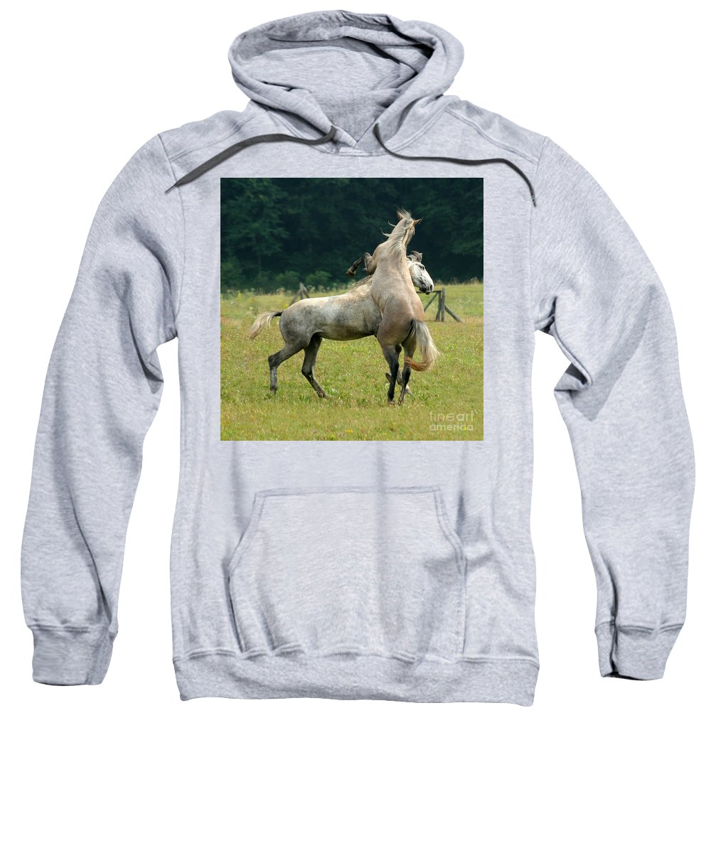 Horse Sweatshirt featuring the photograph The Fight by Angel Ciesniarska