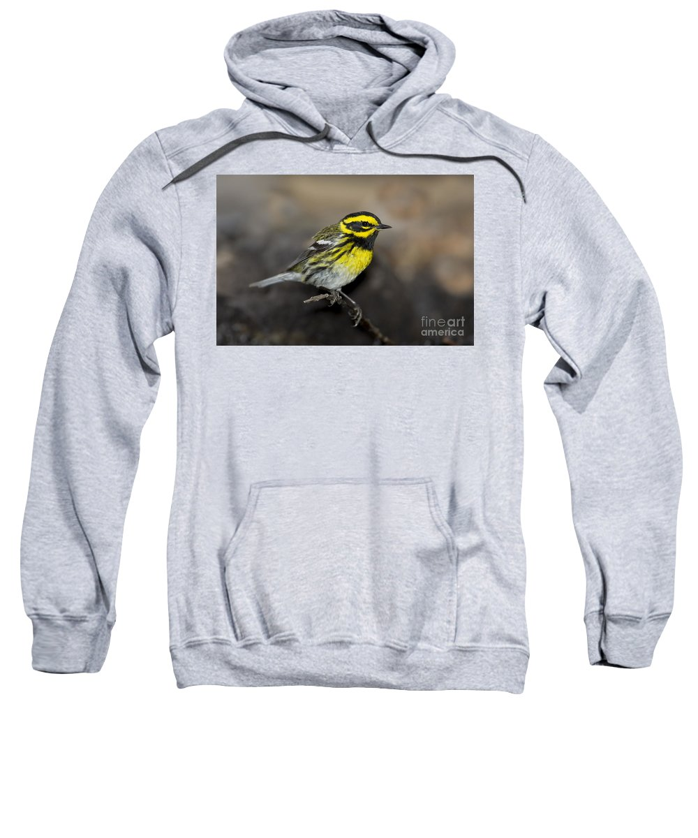 Townsend's Warbler Sweatshirt featuring the photograph Townsends Warbler by Anthony Mercieca