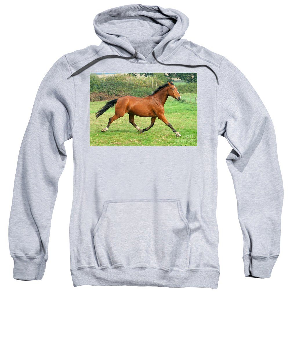 Grey Horse Sweatshirt featuring the photograph The Bay Horse by Angel Ciesniarska