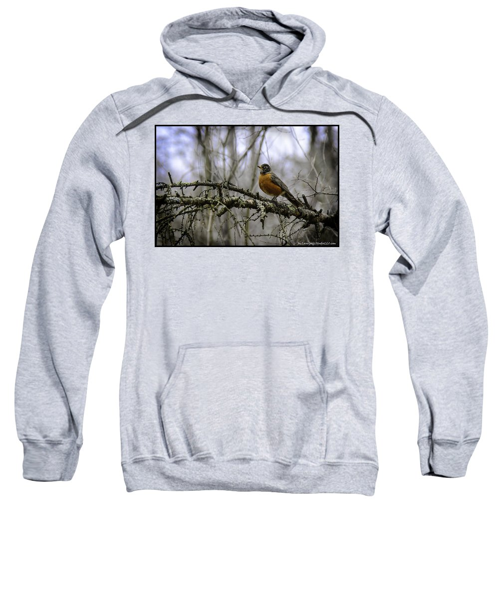Usa Sweatshirt featuring the photograph 1st Robin Of Spring by LeeAnn McLaneGoetz McLaneGoetzStudioLLCcom