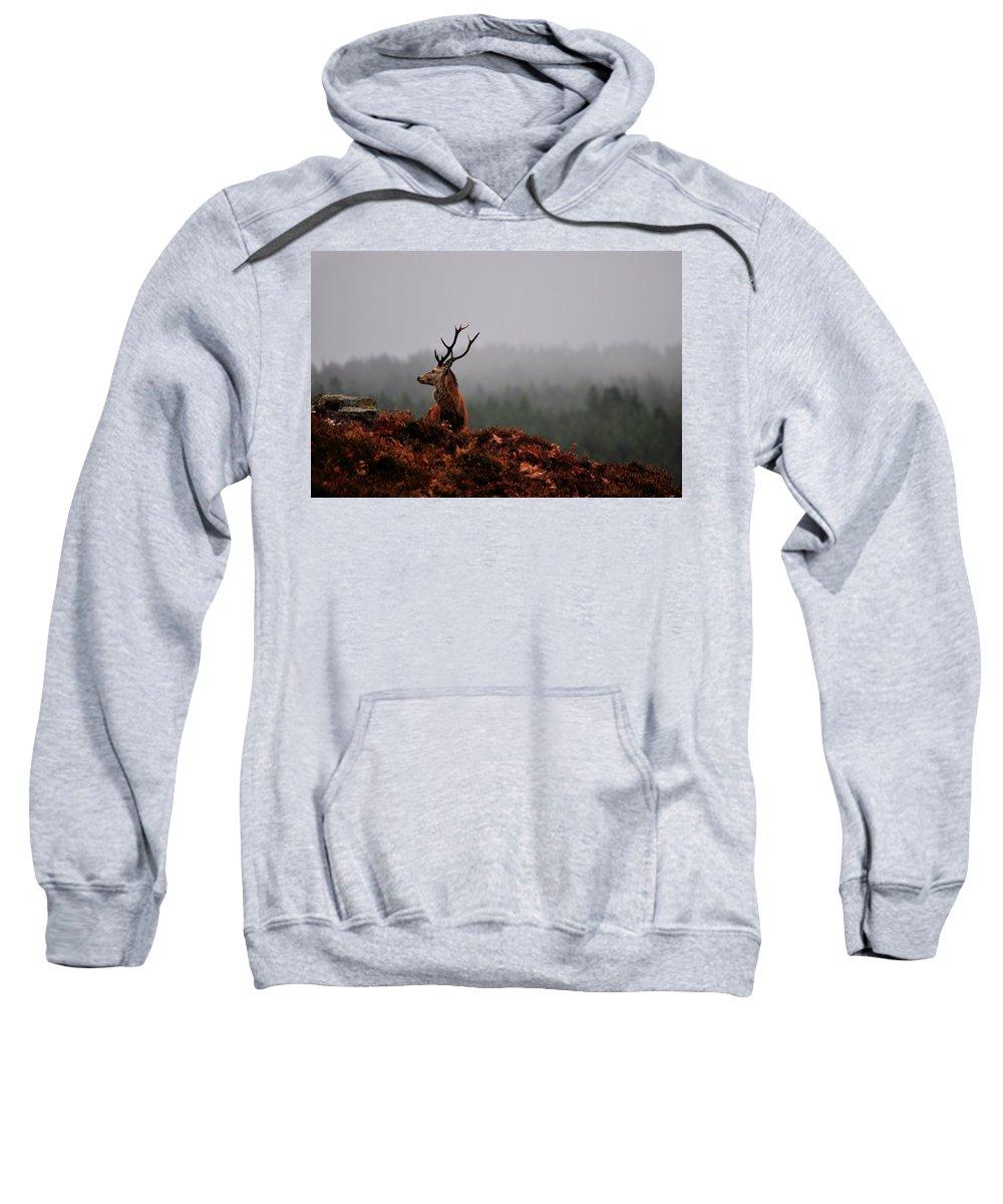 Red Deer Stag Sweatshirt featuring the photograph Red Deer Stag by Gavin Macrae