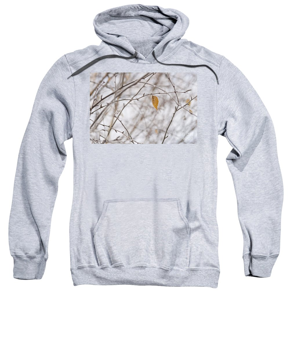 Pacific Northwest Sweatshirt featuring the photograph Autumn Leaf by Jim Corwin