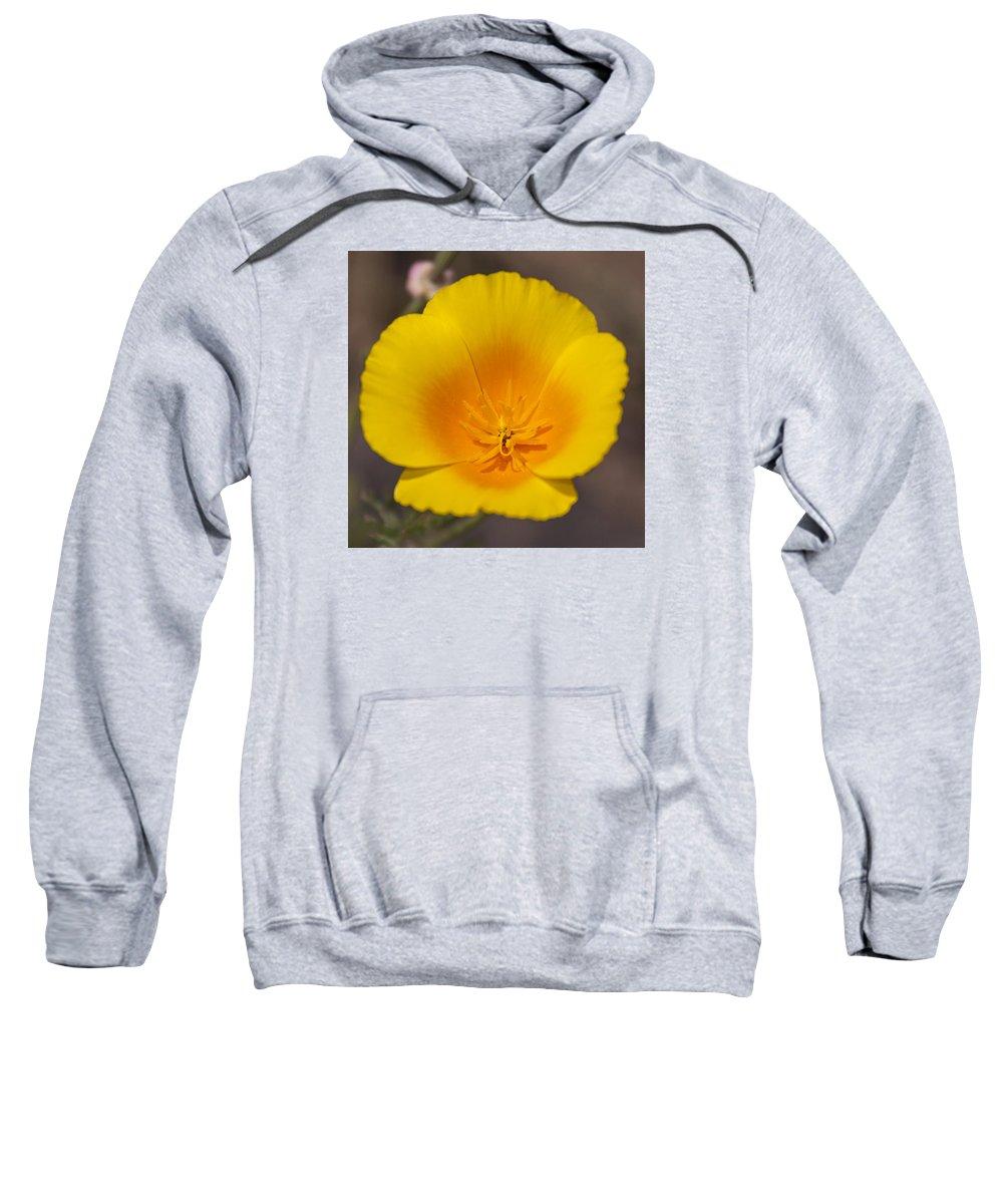 California Poppy Sweatshirt featuring the photograph California Sunshine by Caitlyn Grasso