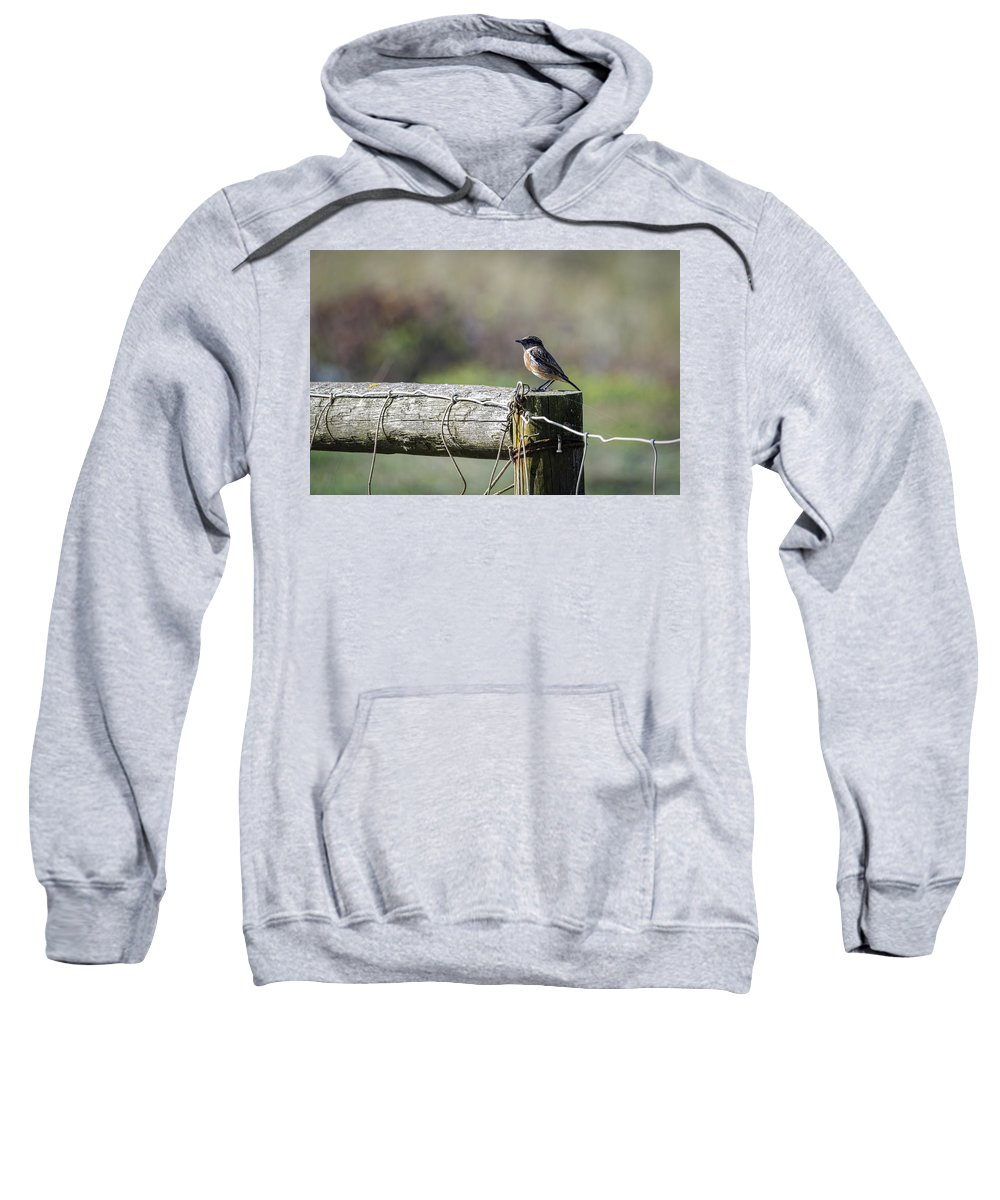 Animal Sweatshirt featuring the photograph Litle Bird by Paulo Goncalves