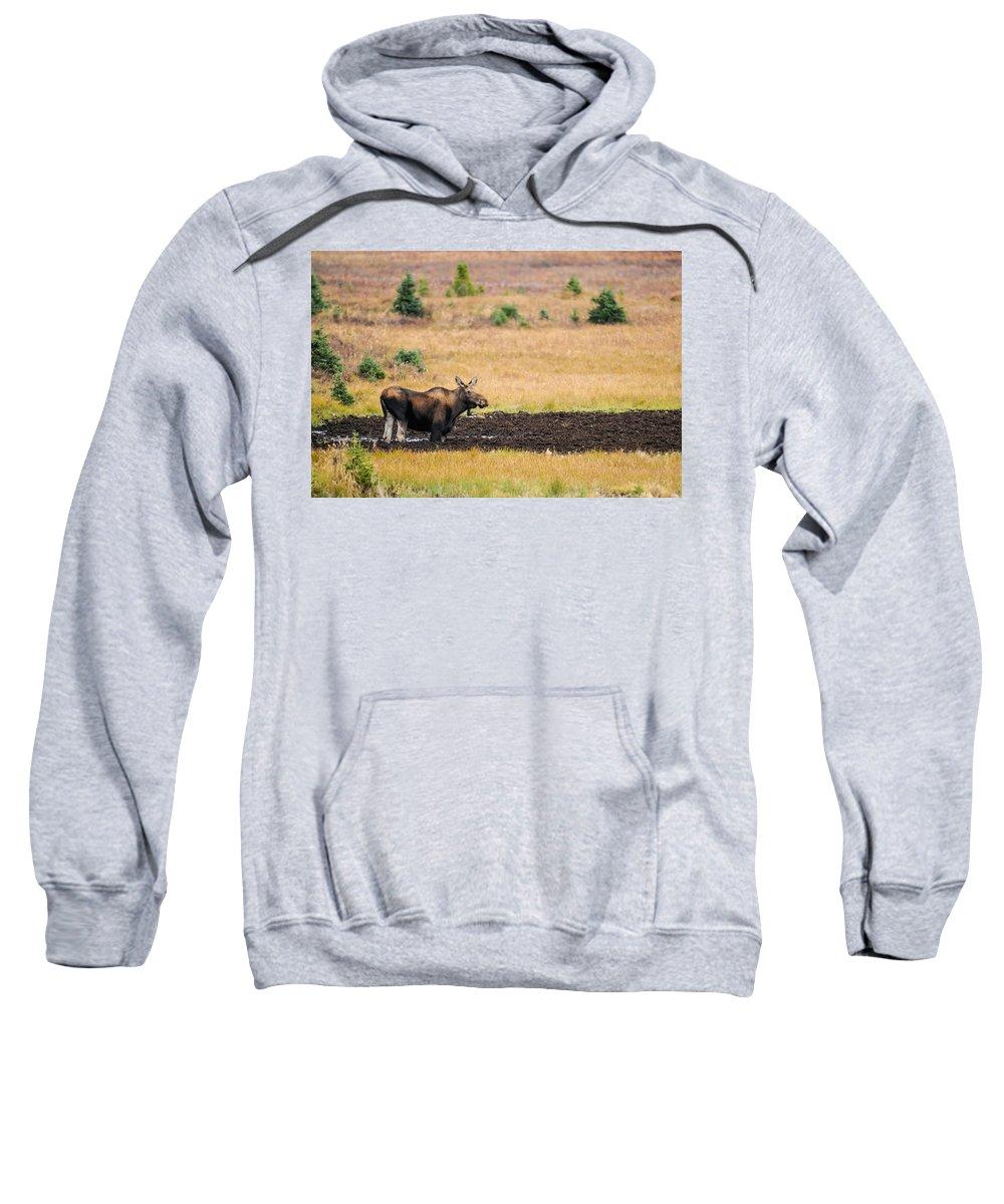 Alberta Sweatshirt featuring the photograph Moose by Brandon Smith