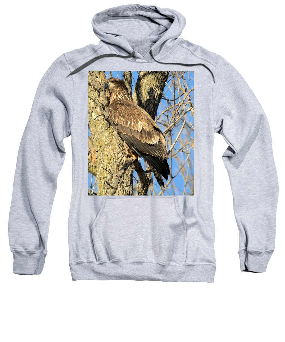 Eagle Sweatshirt featuring the photograph Perched by Bonfire Photography