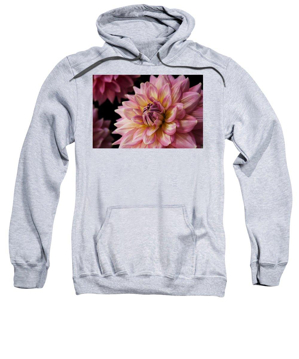 Dahlia Sweatshirt featuring the photograph Pink Dahlia by Sally Bauer