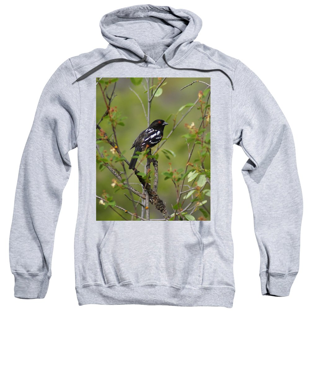 Birds Sweatshirt featuring the photograph Spotted Towhee by Ben Upham III