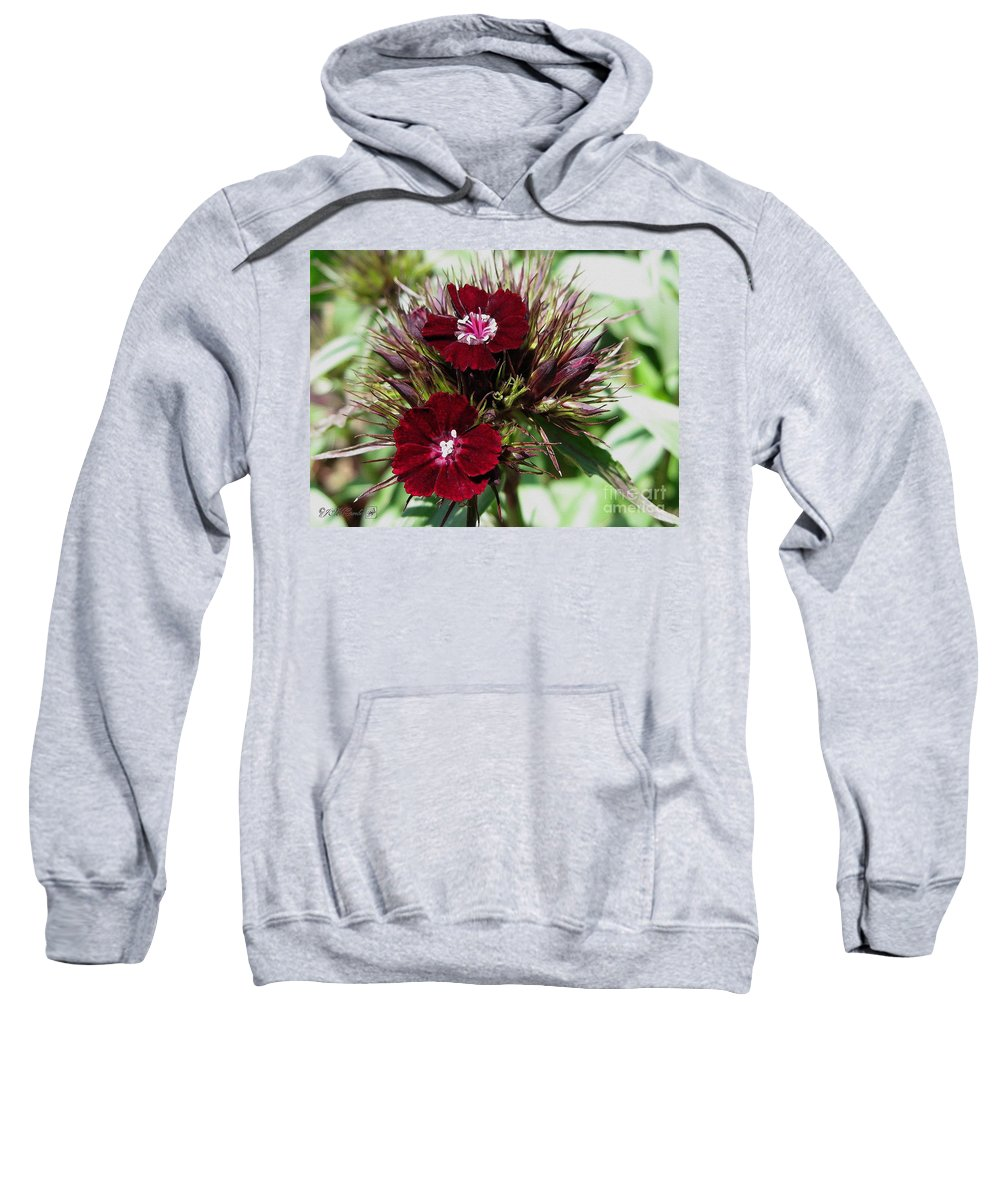 Mccombie Sweatshirt featuring the painting Sweet William Named Sooty by J McCombie