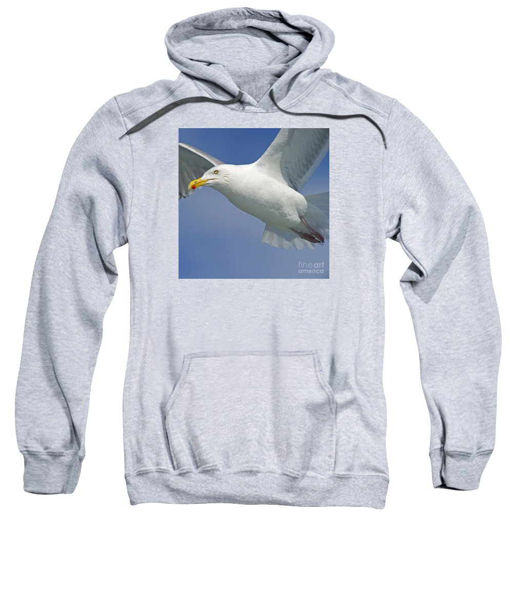 Festblues Sweatshirt featuring the photograph Up Close And Personal... by Nina Stavlund