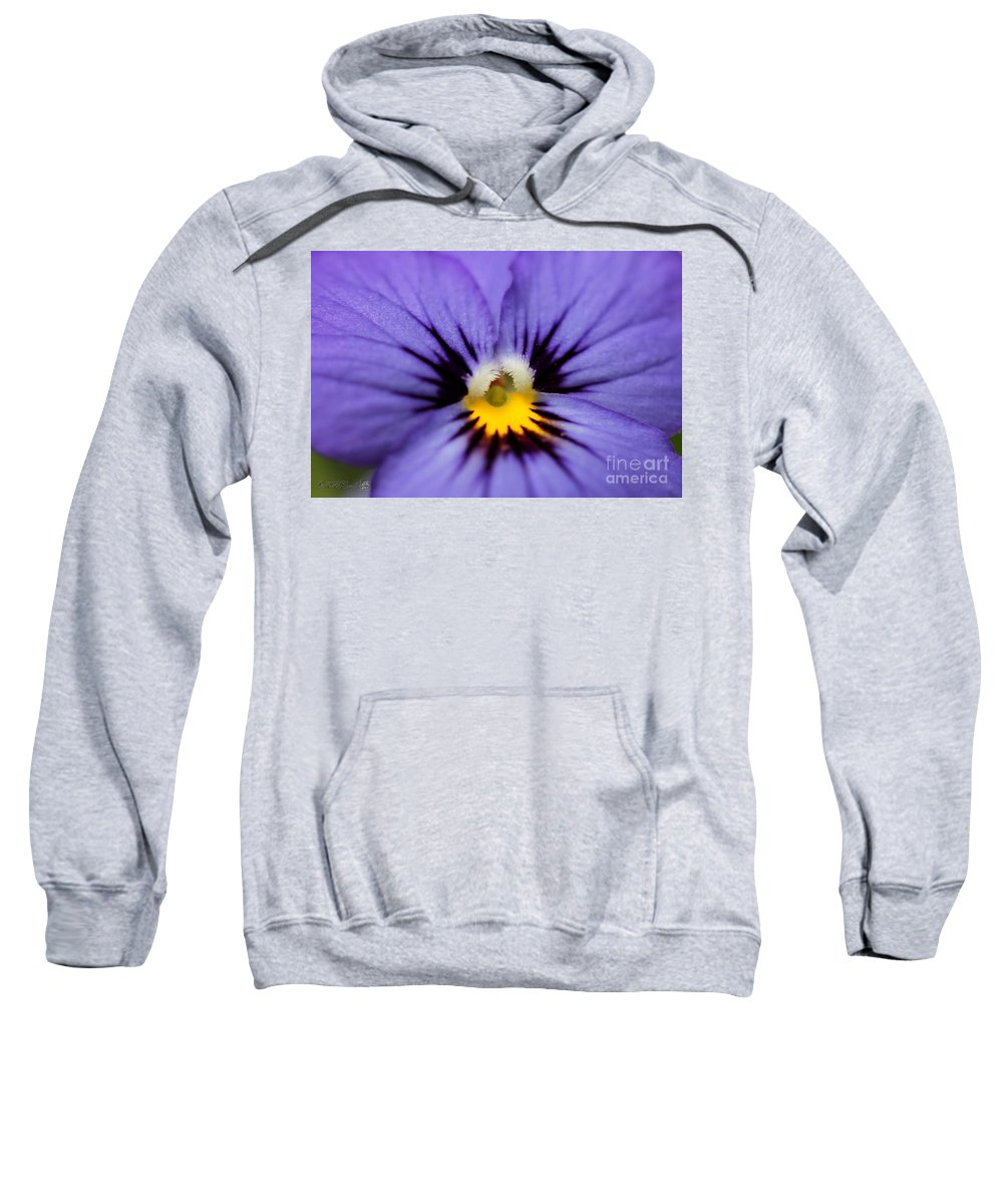 Mccombie Sweatshirt featuring the photograph Viola Named Sorbet Blue Heaven Jump-up by J McCombie
