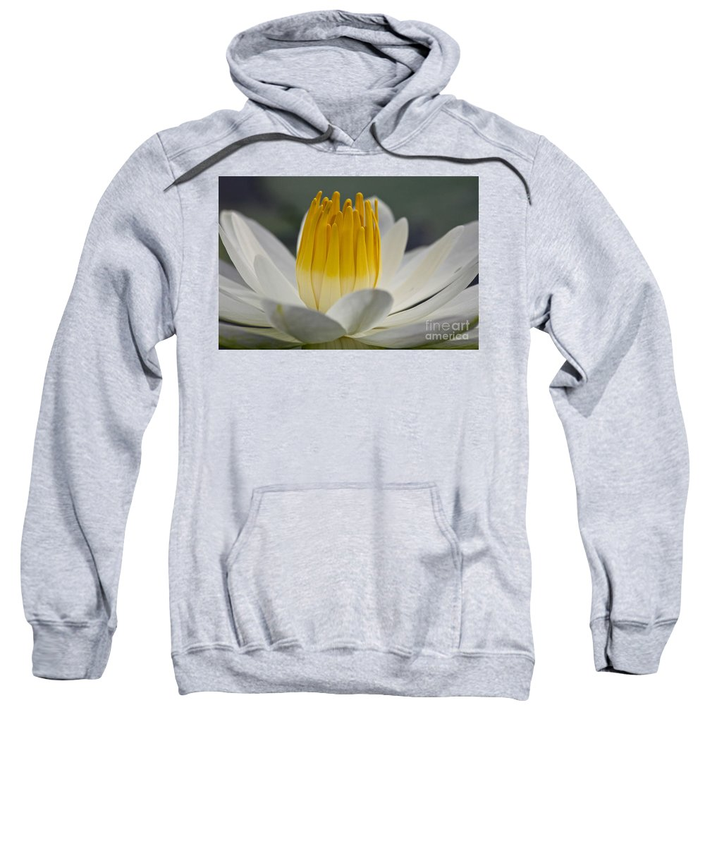 Water Llilies Sweatshirt featuring the photograph White Water Lily by Heiko Koehrer-Wagner