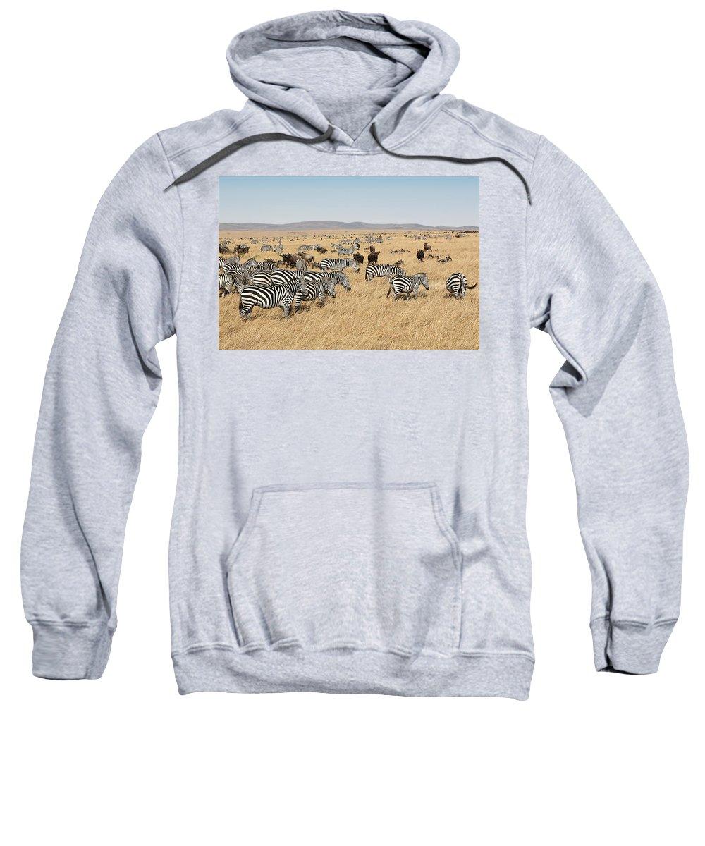 Plains Sweatshirt featuring the photograph Zebra Migration Maasai Mara Kenya by Carole-Anne Fooks