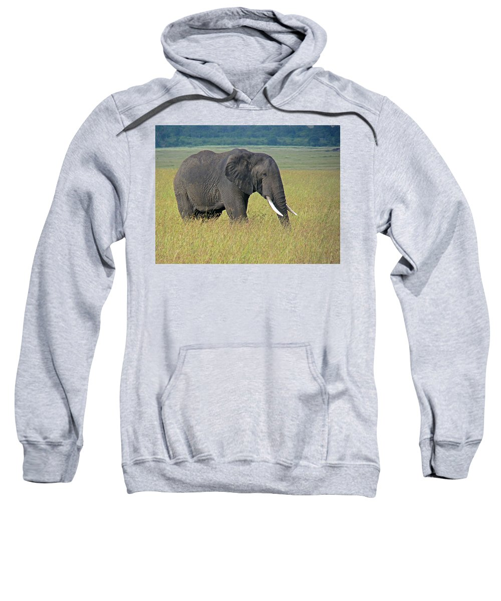 Elephant Sweatshirt featuring the photograph African Elephant by Tony Murtagh
