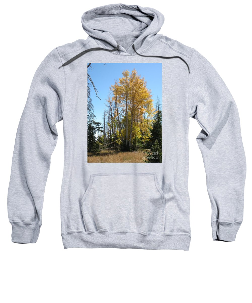 Aspen Trees Sweatshirt featuring the photograph Aspen Trees by Christiane Schulze Art And Photography