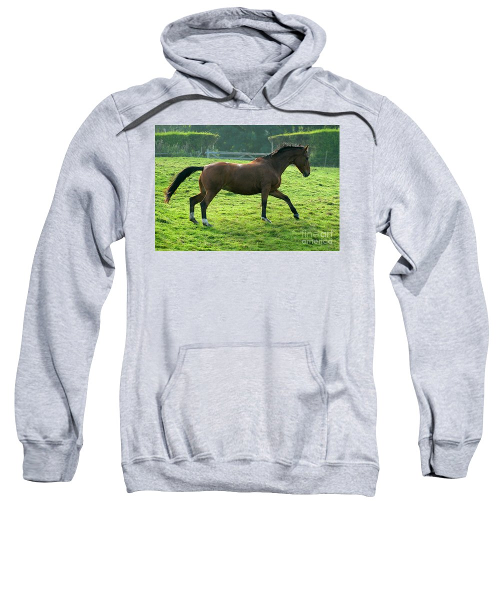 Horse Sweatshirt featuring the photograph Bay Horse by Angel Ciesniarska