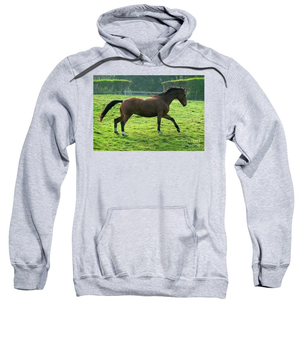 Horse Sweatshirt featuring the photograph Bay Horse by Angel Tarantella